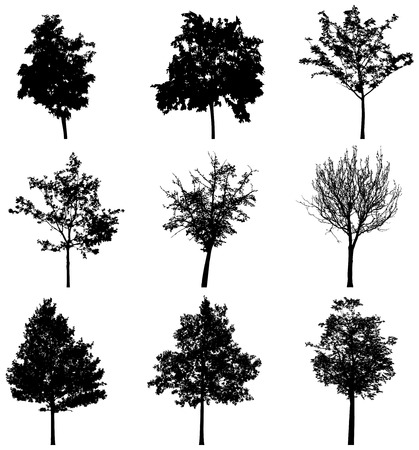treesilhouettes 4
