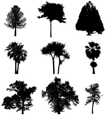 treesilhouettes 5
