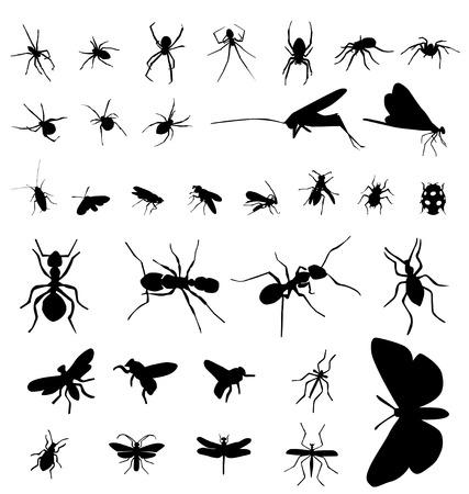 tarantula: insect silhouettes