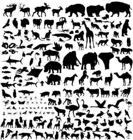 great animal silhouettes collection Ilustração