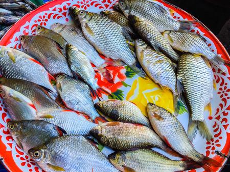 Fresh fishes in a market, Ubon Ratchatani, Thailand