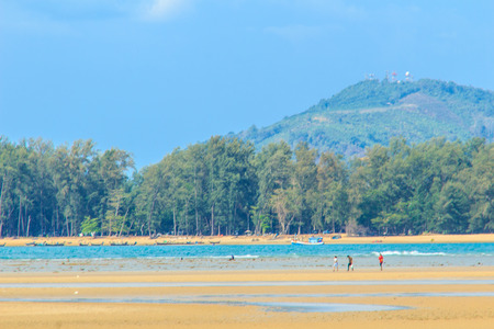Beautiful nature of pine trees and forest on the beach with the sea, mountain and blue sky background