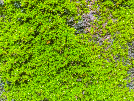 Close-up old brick wall with moss and lichen
