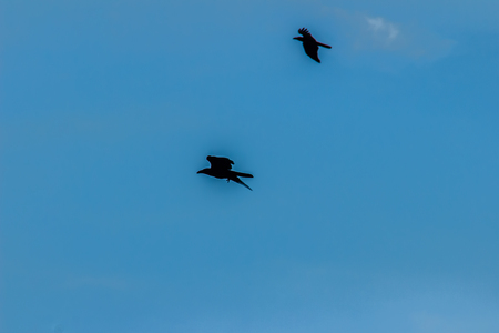 insectivorous: Silhouettes of flying bird under blue sky background Stock Photo