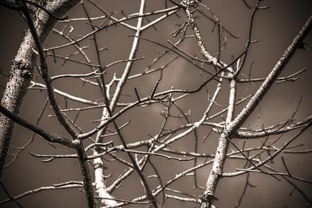 Ramas De árboles Sin Hojas De Fondo. Árbol De Estación Seca Sin ...