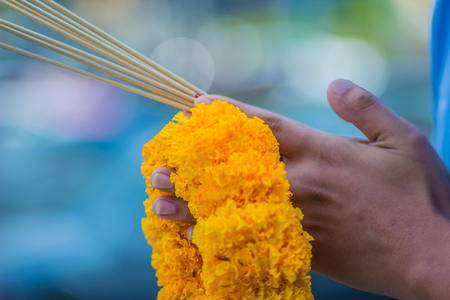 Close up people hands holding incense sticks and marigold, flower wheel during made merit for worship ceremony