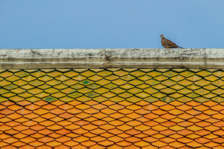 Grey pigeon perching on the ridge of orange tiled roof with blue sky background. Stock Photo
