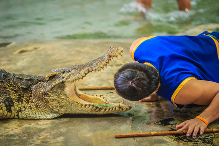 Nakhon Pathom, Thailand - May 18, 2017: Risky crocodile shows at Samphran Crocodile Farm, one of the most impressive public crocodile shows in the world.
