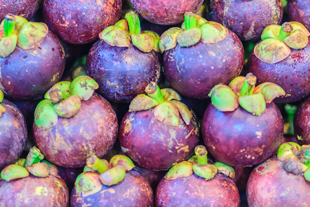 Extra large size of the purple mangosteen (Garcinia mangostana) for sale at the fruit market. Close up texture background surface of organic violet mangosteen fruit.