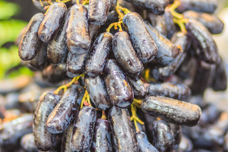 Extra jumbo size of black seedless Moon Drops grape or Witch Fingers grape for sale at the fruit market. Organic sweet long black sapphire grapes on sale.