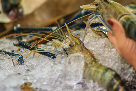 rosenbergii: Extra large size of giant malaysian prawn (Macrobrachium rosenbergii) also known as the giant river prawn or giant freshwater prawn, is a commercially important species of palaemonid freshwater prawn