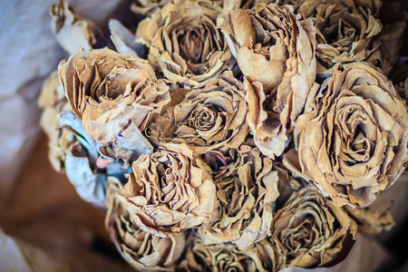 Dried wedding roses flower bouquet background. Close up bouquet of dried withered roses.