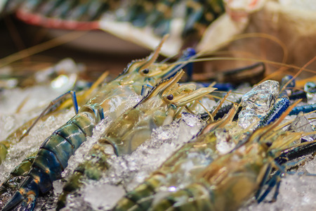 expensive: Extra large size of giant malaysian prawn (Macrobrachium rosenbergii) also known as the giant river prawn or giant freshwater prawn, is a commercially important species of palaemonid freshwater prawn