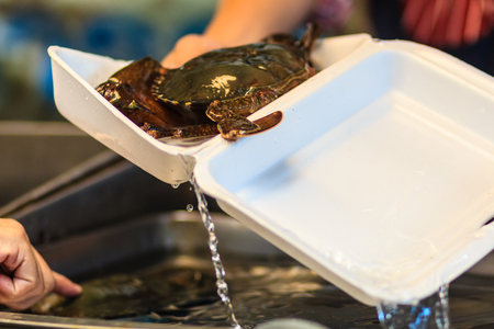 Soft shelled Serrated mud crab (Mangrove crab, Black crab) for sale at seafood market. Soft-shell crab is a culinary term for crabs which have recently molted their old exoskeleton and are still soft.