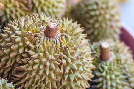 Extra jumbo size of Monthong durian fruits for sale at the fruit market in Bangkok, Thailand. Organic durian is the important economic fruit for consuming and export of Thailand.