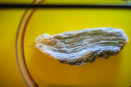 Amphibole silicate mineral that commonly found in metamorphic rocks. Reklamní fotografie - 85655494