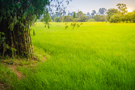 Mixed farming by planting bamboo trees in rice fields is agricultural system in which a farmer conducts different agricultural practice together two or more of plants simultaneously in the same field.