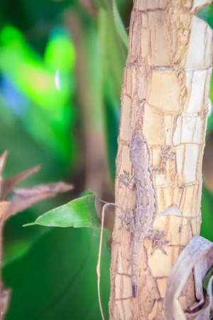Small lizard is perched on the tree trunk and merging color too difficult to distinguish.