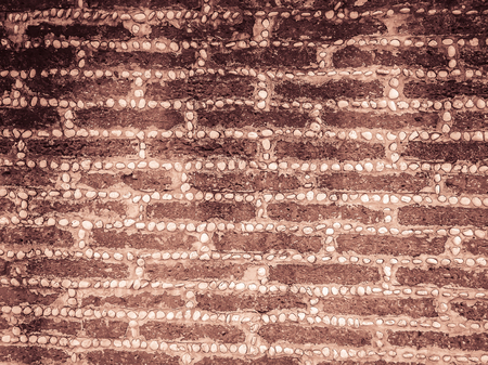 Laterite stone block and gravel dash pattern in the boundary fence wall. Laterite stone block wall pattern with gravel hyphen texture background. Stok Fotoğraf