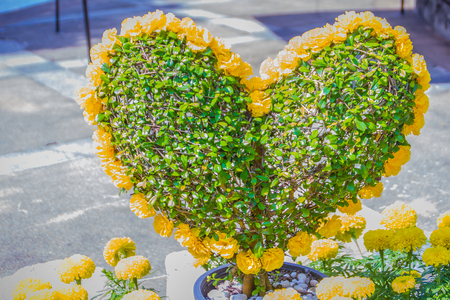 Heart-shaped bonsai with yellow flowers decorated in the garden. Green bonsai tree in the form of a heart with yellow flower.