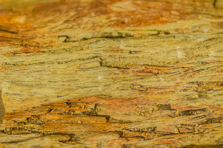 Background of Petrified wood, a special type of fossilized remains of terrestrial vegetation of tree or tree-like plants having completely transitioned to stone by the process of permineralization.