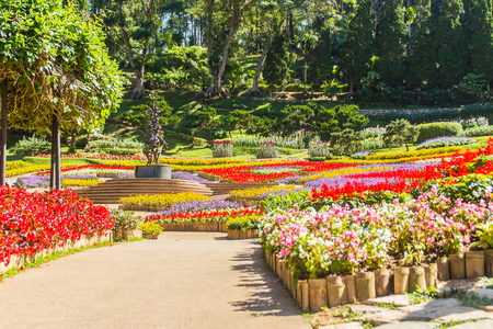 Chiang Rai, Thailand - November 18, 2017: Colorful flowers at Mae Fah Luang Garden, Chiang Rai, Thailand. Garden of cold winter flowers such as Salvia Petunia Begonia roses, flowers, auspicious trees.