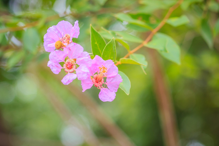 Beautiful purple wild flowers on tree in the tropical forest. Stock Photo
