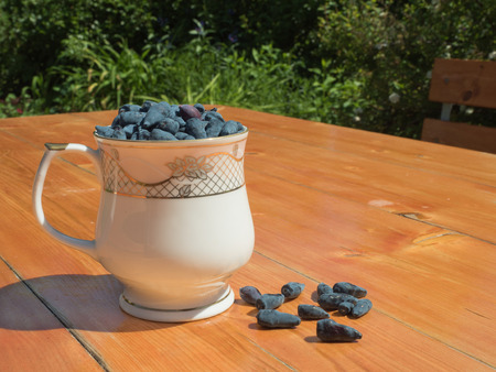 house ware: The berries of honeysuckle in a beautiful glass