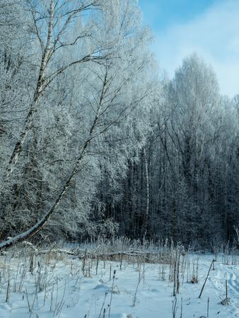 숲에서 서리가 내린 맑은 날 스톡 콘텐츠