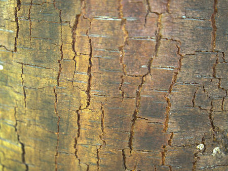the texture of the bark of an old tree in the forest