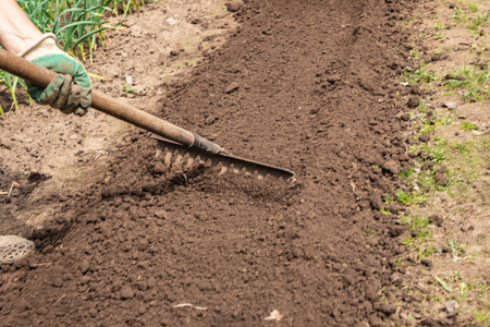 Preparation of beds for planting after winter, rake loosened and leveled the ground in the beds