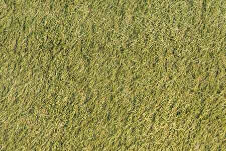 Artificial green background, covering sports grounds. close-up