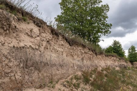 Many swallow nests in a steep slope on the river Bank. Kaluga region Russia Banco de Imagens
