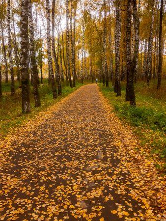 Asphalt path strewn with fallen birch leaves in the autumn Park. Autumn landscape, the seasons. Tula region, Russia