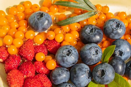 ripe blueberries and sea buckthorn berries collected on the plot. Colorful and healthy concept. close up