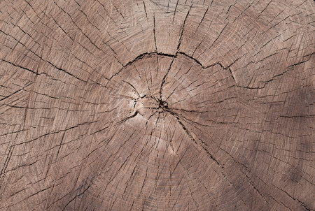 Closeup of warm flat wood texture. Annual rings of tree stump cut down from nature. Stock Photo