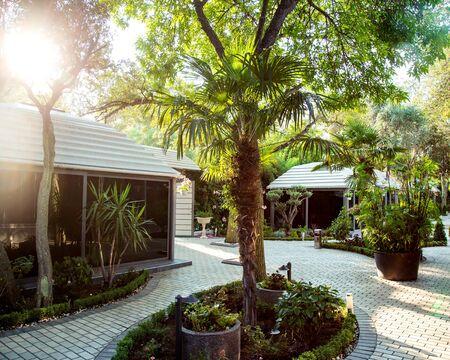 a palm in the garden Stok Fotoğraf - 134747539