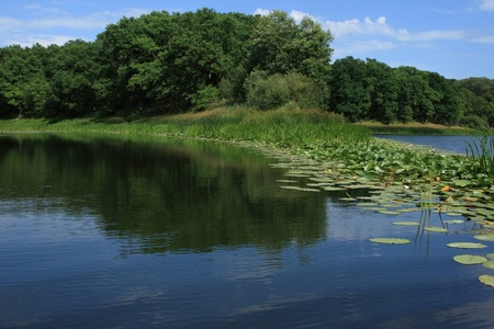 Quiet lake in wood in a summer sunny day photo