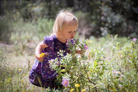 Un portrait d'une petite fille mignonne reniflant les fleurs sauvages sur une belle journée d'été Banque d'images