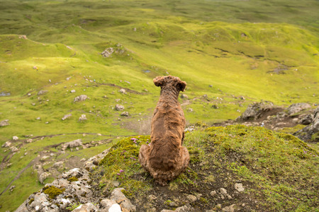 Brown dog sitting on a peak, looking down the green, rocky valley, waiting, watching Banque d'images