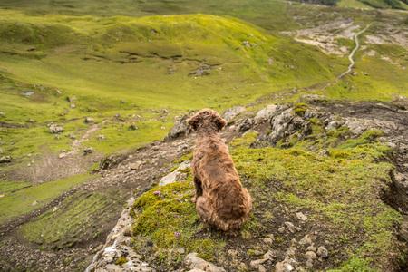 chien Brown assis sur un pic, regardant vers le bas le vert, vallée rocheuse, attente, regarder Banque d'images