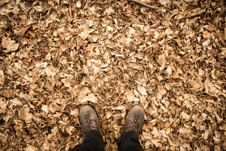 Male leather hiking boots with autumn leaves Banque d'images