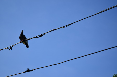 wire and bird photo
