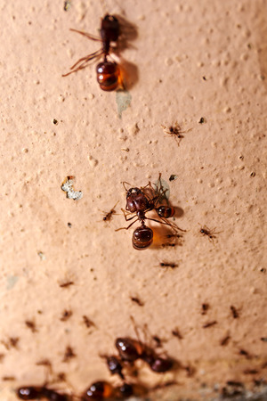 big: Big ant on the wall