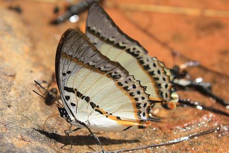io: Butterflies.