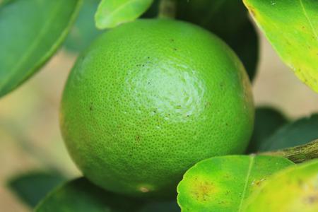 Lemon green photo