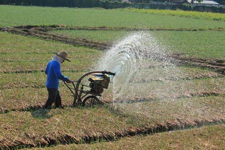 Spraying water in rice. photo