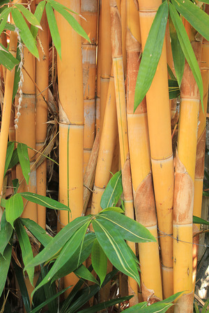 Bamboo forest. photo