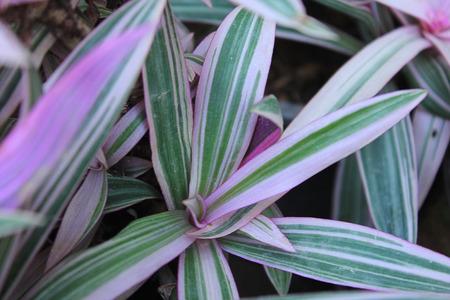 pink  leaf: Pink leaf background