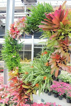 animal vein: Ornamental plants Heart